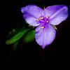 Flower Copyright 2018 Steve Leimberg UnSeenImages Com Z2A2574