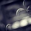 2012_11 Backyard Flora 05