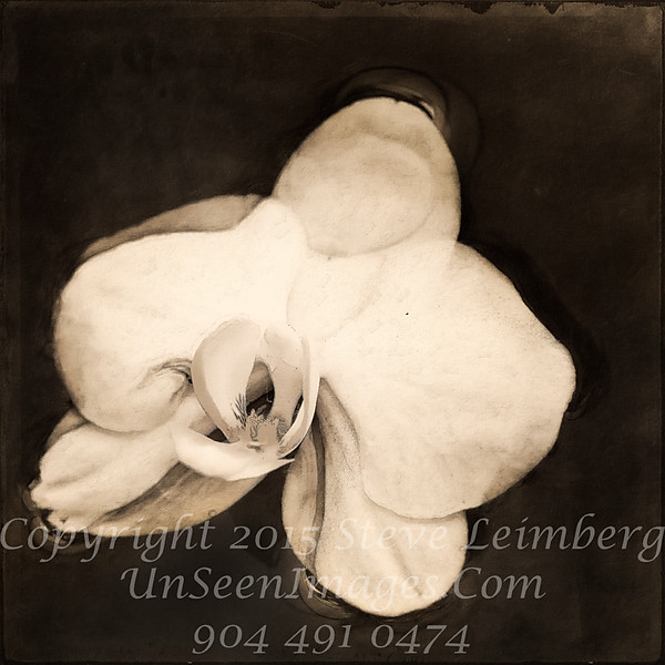 Floating Orchid - B&W Copyright 2016 Steve Leimberg - UnSeenImages Com _Z2A4529