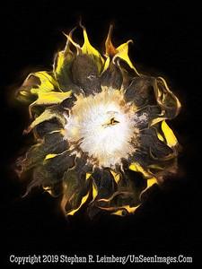 Back of Sunflower - PAINTING II Copyright 2018 Steve Leimberg UnSeenImages Com 2018-08-06 16-26-08 (A,Radius8,Smoothing4)