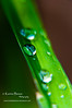 water drops leaf green