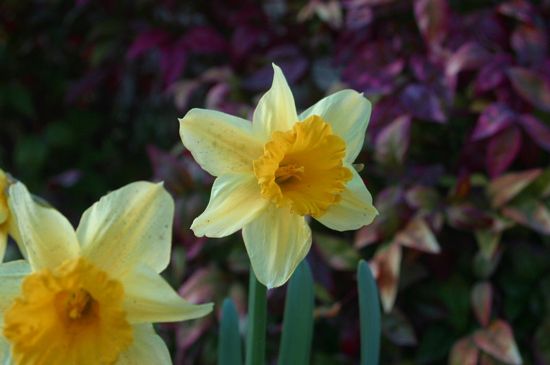 Some of the flowers outside the gate at the entrance to Toccoa Falls, taken in March, 2006.