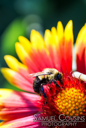 A bee on a flower.