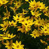 Sweet array of yellow flowers.