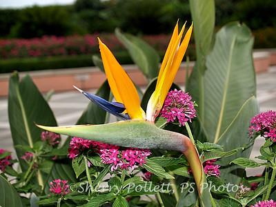 Bird of Paradise at Moody Gardens, Galveston, Texas