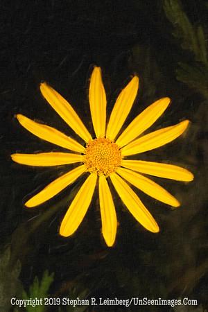 Sunflower oil _L8I3463