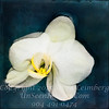 Floating Orchid - Copyright 2016 Steve Leimberg - UnSeenImages Com _Z2A4529