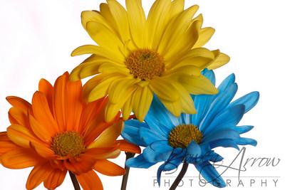 Flowers-167