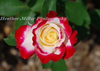 Luke Rose--Cherry Parfait-0066