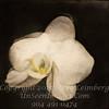 Floating Orchid - V3 x  Copyright 2016 Steve Leimberg - UnSeenImages Com _Z2A4529