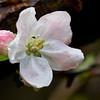 Spring anew