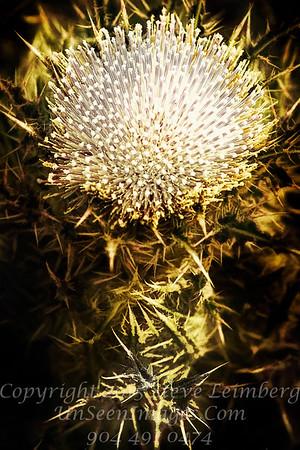 Thistle White Oak - PAINTING - Copyright 2017 Steve Leimberg - UnSeenImages Com _Z2A7932