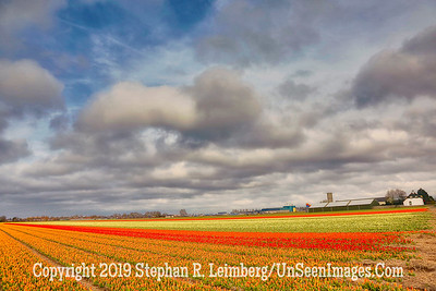 Tulip Fields Clouds and Sky 20130416_2578