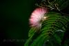 20150531- Bird Magnolia Plantation Swamp-495