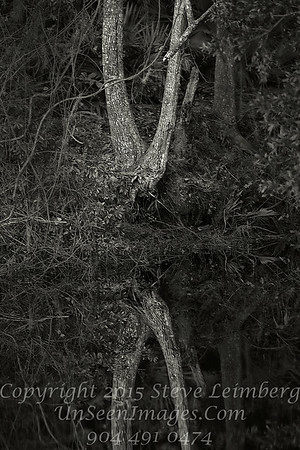 Double Tree at Golden Pond - B&W Copyright 2016 Steve Leimberg - UnSeenImages Com _Z2A0766