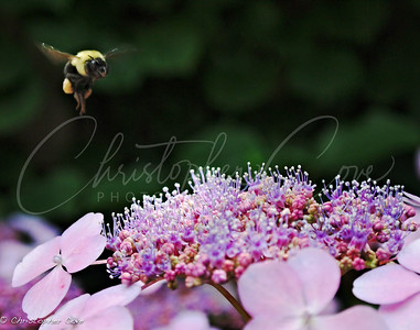 Bee above
