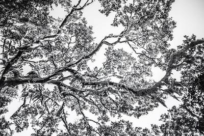 Trees Copyright 2021 Steve Leimberg UnSeenImages Com L1001134