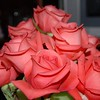 Rows of Roses