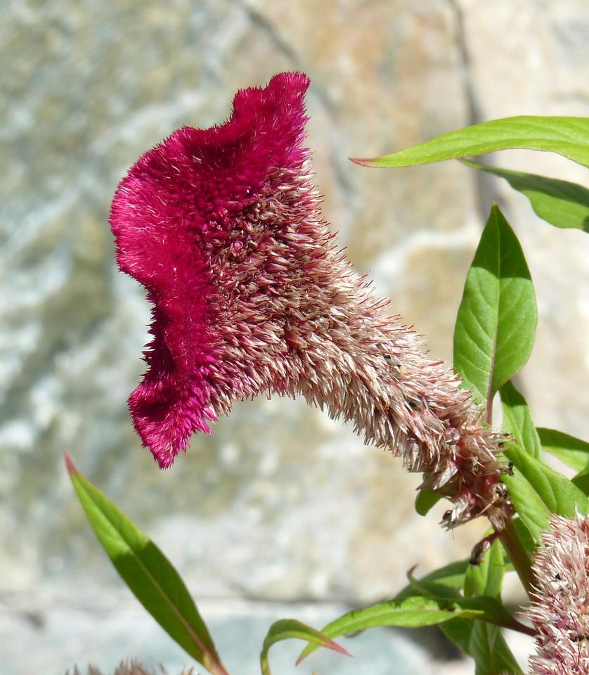 Panama. Lovely blooms that feel like velvet. Identity unknown.