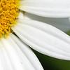 DSC01561_ crop_closeup