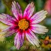 Color War - Copyright 2015 Steve Leimberg - UnSeenImages Com _Z2A7870