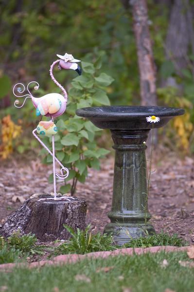 Daisy at the Bird Bath-7263