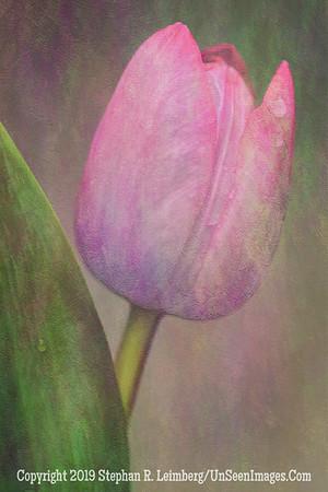 Pink Flower 2  20130415_1911