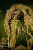 07-31-08 dead weed edgedarkeningeffect-20080731