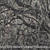 Preserve - Don't Breat This Bough B&W - Copyright 2015 Steve Leimberg - UnSeenImages Com  - _M1A9151