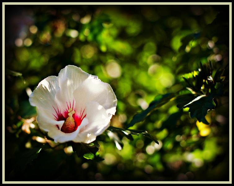 8 10 Flower 2