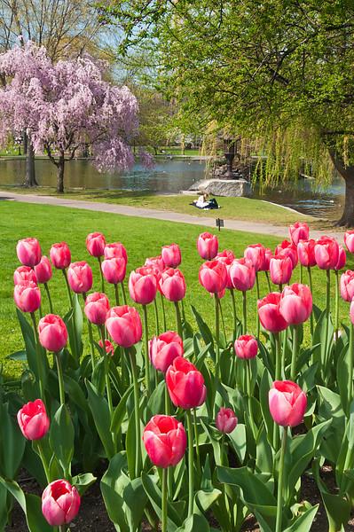 Spring Colors in Boston Garden