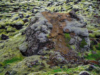 Rock with Moss Copyright 2021 Steve Leimberg UnSeenImages Com _DSF1510