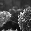 2012_11 Backyard Flora 01a