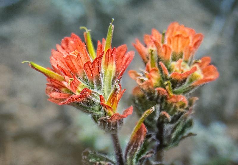Orange Flowers-7111