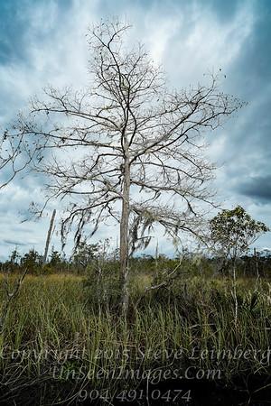 Tree at White Oak - Copyright 2017 Steve Leimberg - UnSeenImages Com _Z2A7896