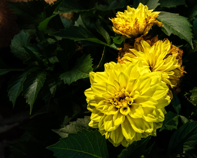 3 Yellow Flowers-2