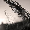 Flora Sunrise 09