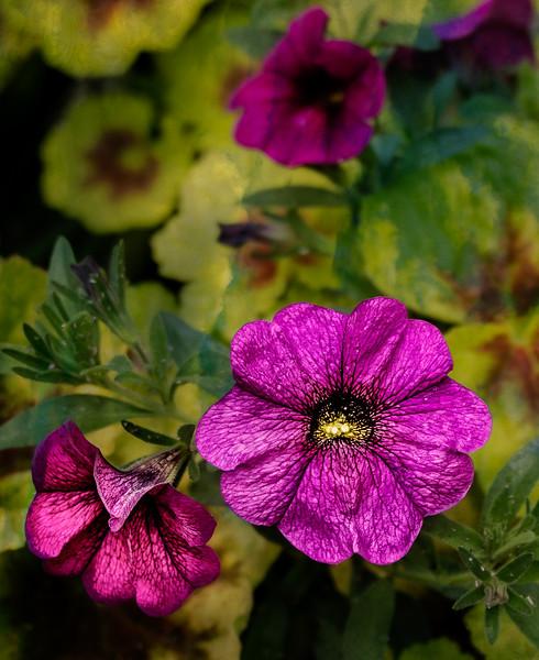 Pink Flower-7211