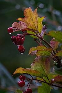 Autumn colors in the rain