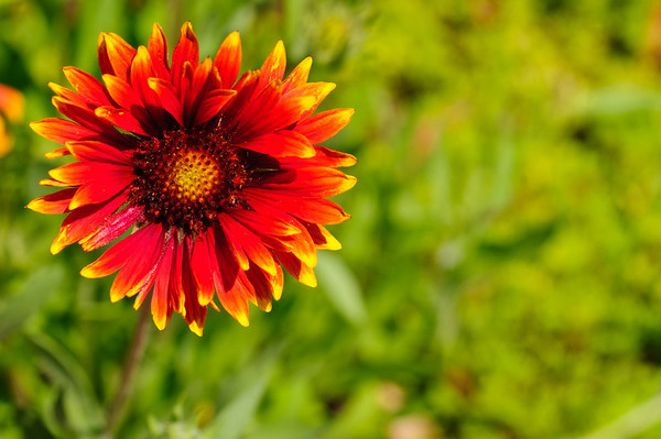 This photo of a bright red flower was taken outside the Butterfly Garden at the Danville Science Center