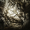 As I Look Up One Last Time - Evergreen Cemetery Magic Tree  - Copyright 2014 Steve Leimberg - UnSeenImages Com _H1R8456
