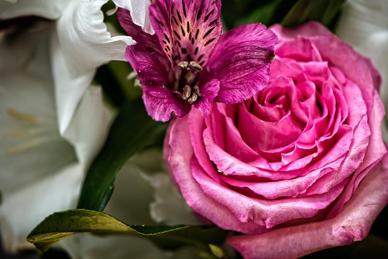 Rose-0197