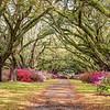 Springtime in Charleston, Hillsborough Plantation
