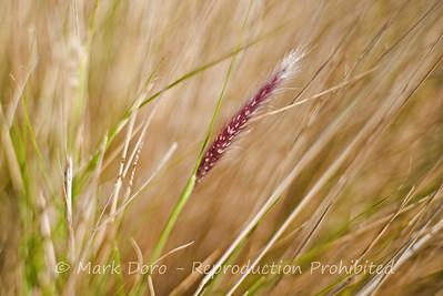 Grass Seeds, Williamstown