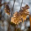 Flora Sunrise 01