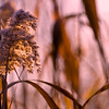 Flora Sunrise 04