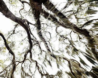 Tree 10 - Copyright 2018 Steve Leimberg UnSeenImages Com DSF4284