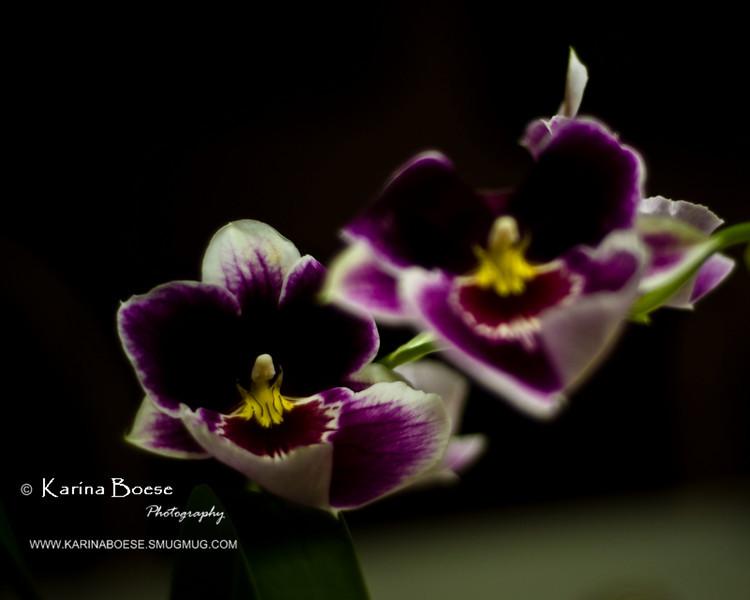 orchid purple flowers color crop