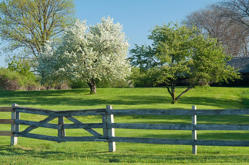 A Lovely Spring Morning