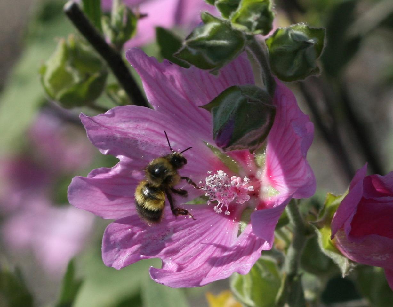 Busy Bee caught in flight